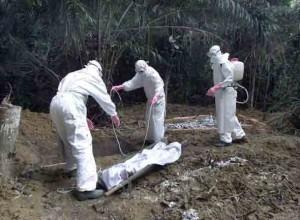 Ebola-Virus-2